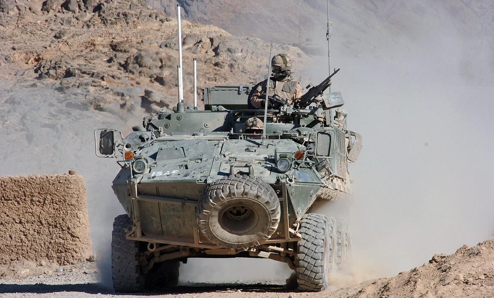 Bison in Afghanistan